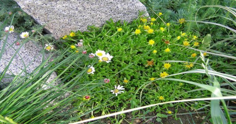 rocallas decorativas flores amarillas