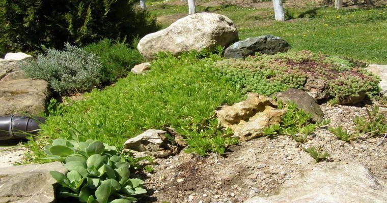 plantas rocas naturales decorativas