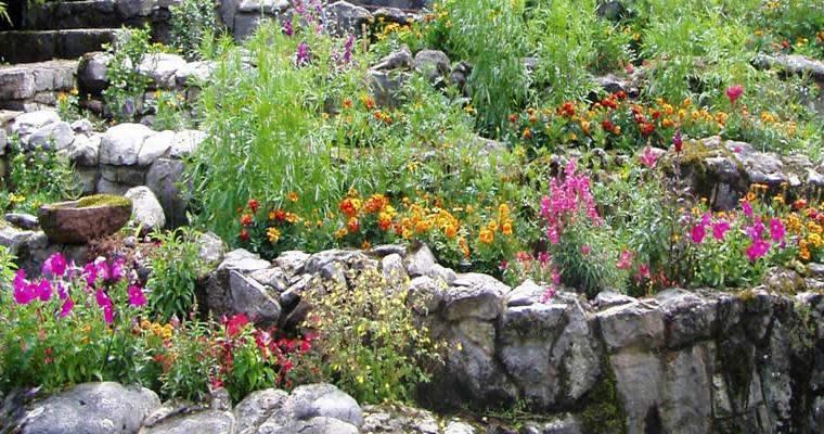 rocallas estupendas flores bonitas