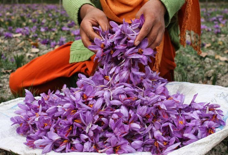 saco lleno flores especias Azafrán