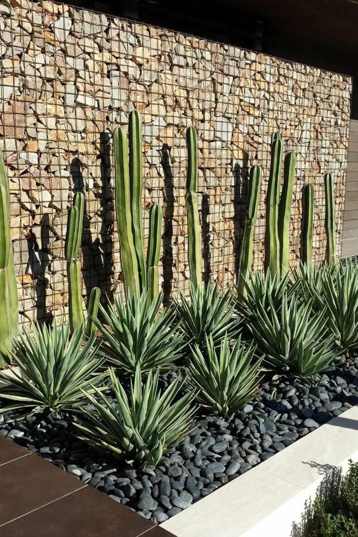 suelos cactus salas maderas puertas rocas