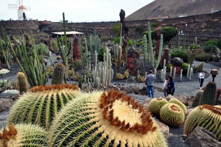 vista paisaje jardin cactus Lanzarote