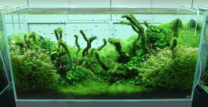 acuarios cristales luminarias senderos verde