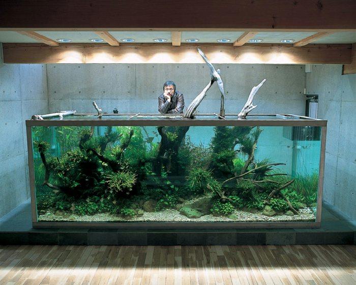 acuarios elementos muestras espacios maderas
