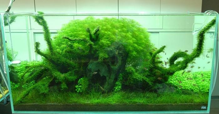 acuarios montañas cubiertas plantas cuavas