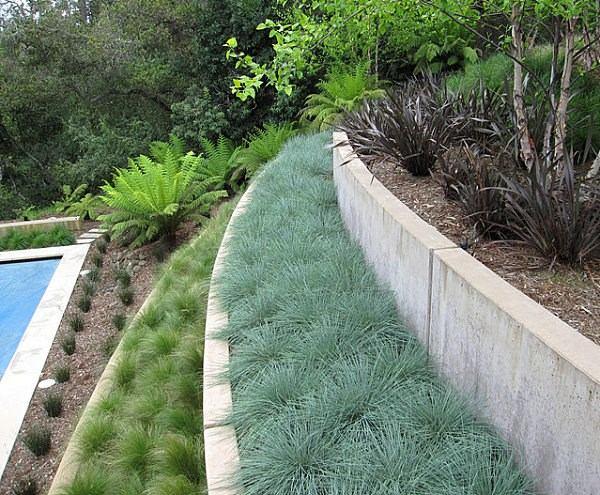 arbustos jardin terrazas opciones ideas