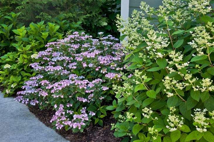 atractivos elementos arbustos consejos flores