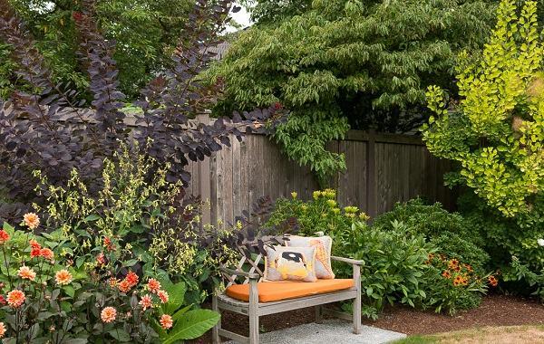 banco madera rodeado plantas arbustos ideas