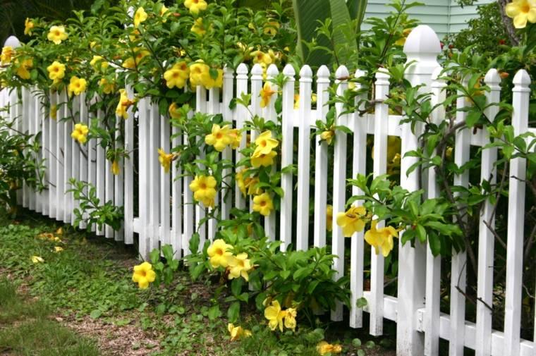 bonita valla blanca flores amarillas