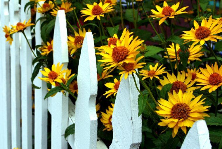 bonita valla madera color blanco