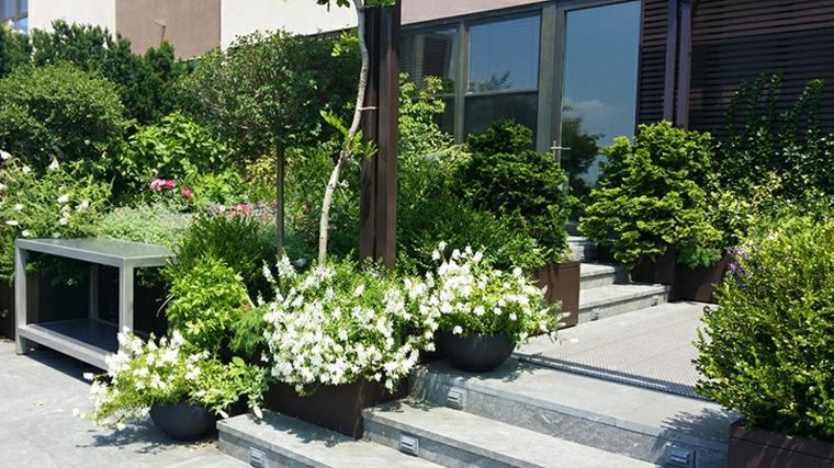 bonitas plantas arbustos terraza