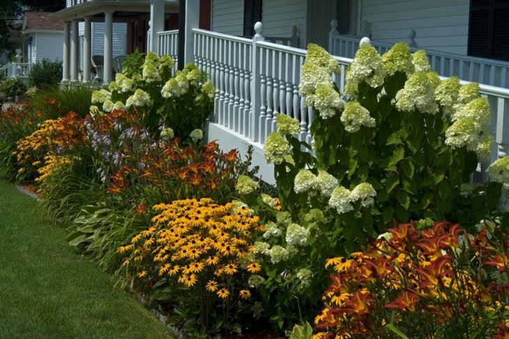 coloridas plantas flores ejemplos frontal