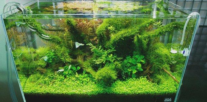 combinaciones plantas peces muestras flores