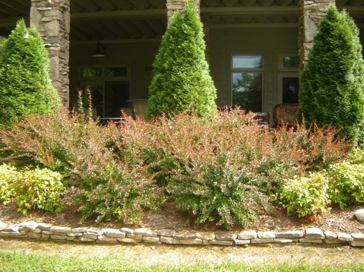 soluciones pinos plantas efectos rocas