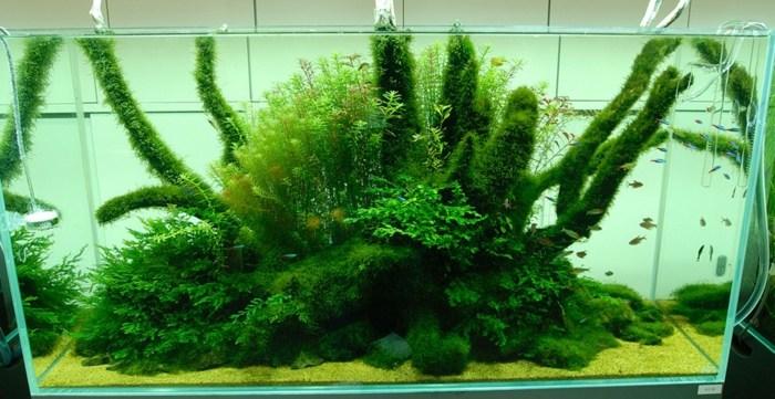 conceptos muestras fauna marina plantas