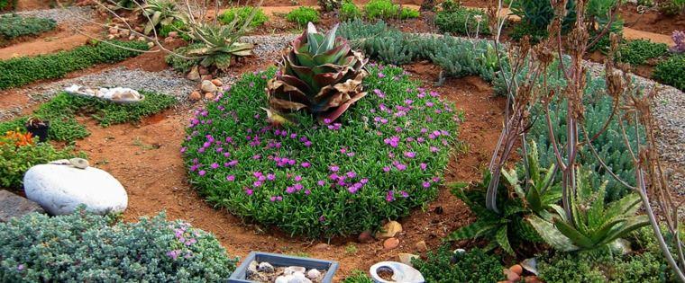 diseño paisaje plantas secano