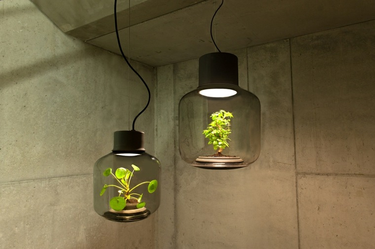 dos lámparas vidrio plantas