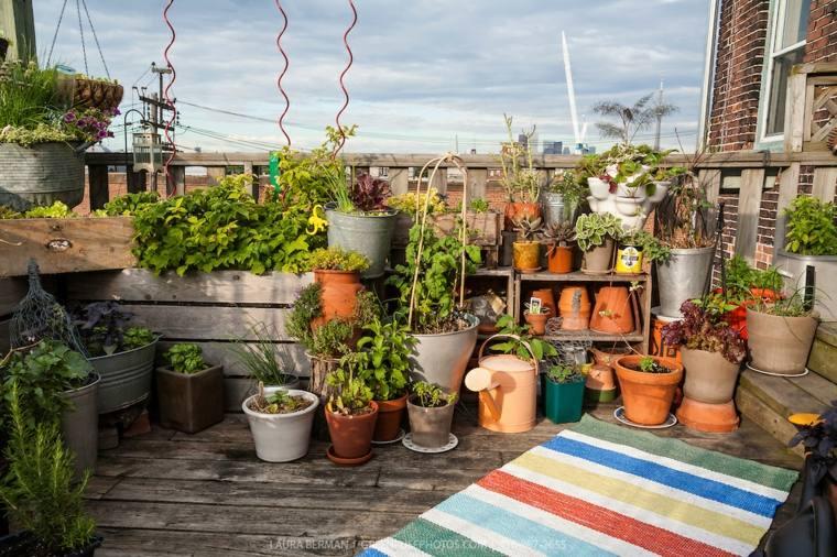 azotea plantas macetas huertas