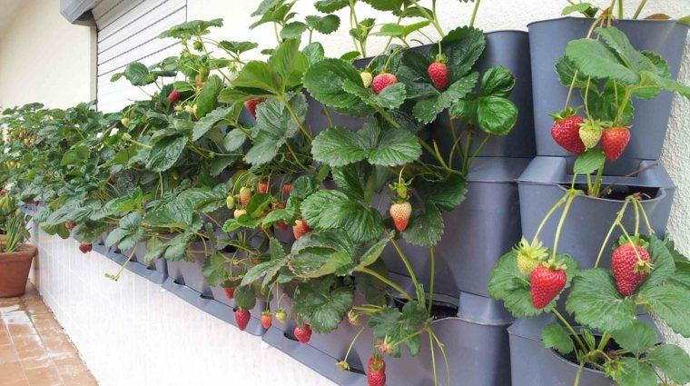 fresas maceta jardin terraza vertical
