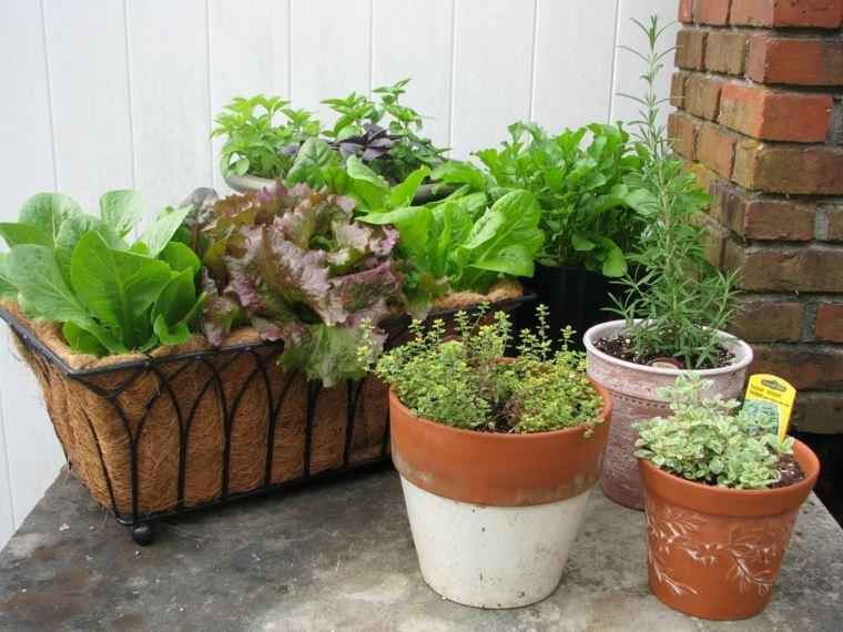 ideas plantar especias naturales