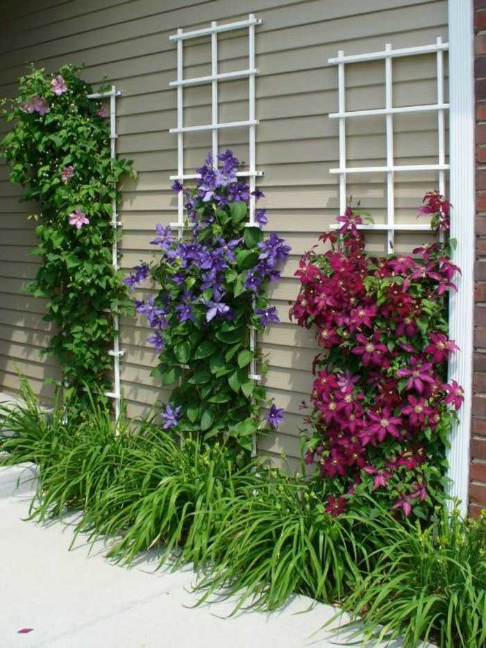 imagenes paisaje jardin flores trepadoras ideas