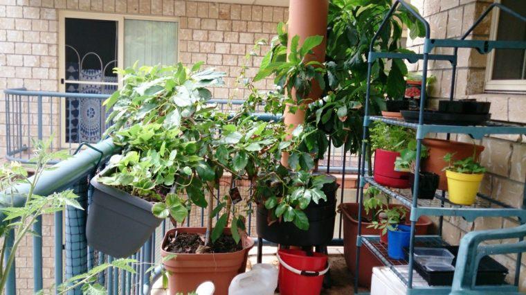 jardinera estanterías macetas plantas