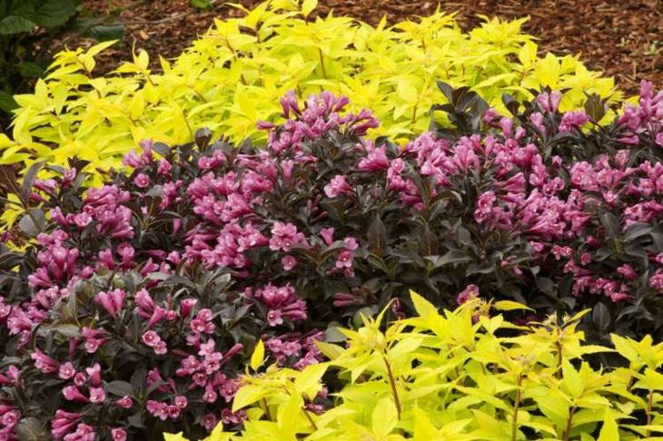 jardines arbustos coloridos eventos mantillo