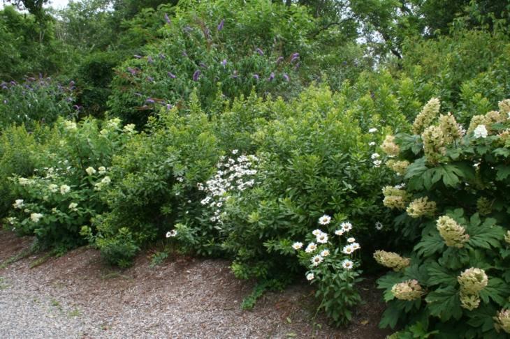 Jardines arbustos para llenarlos de belleza y color - Arbusto pequeno con flores ...