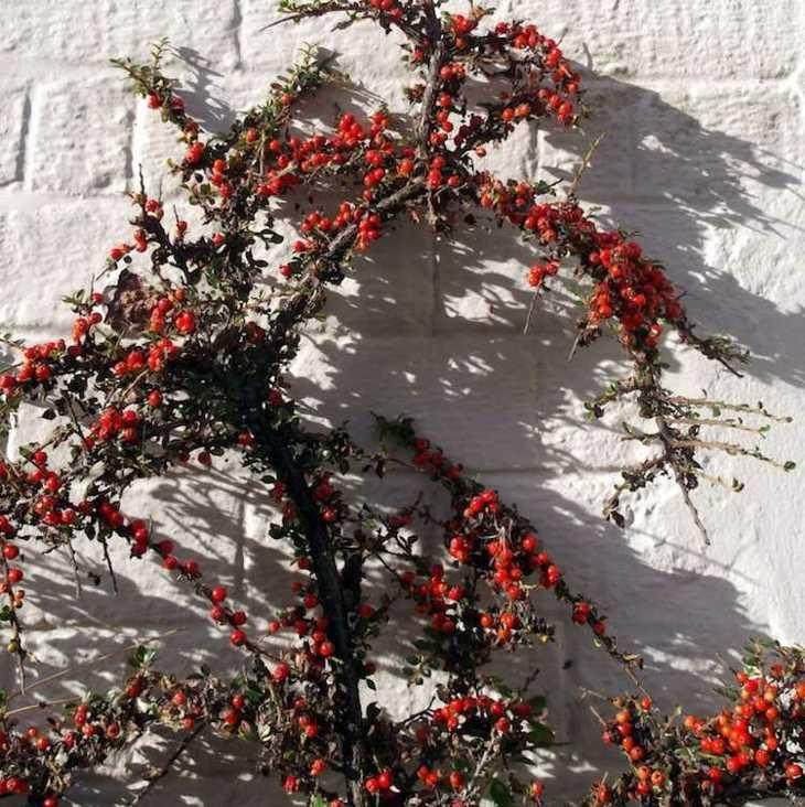 Jardines arbustos para llenarlos de belleza y color for Arbustos para patios