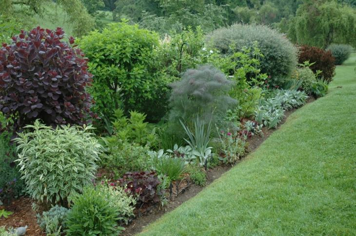 Jardines arbustos para llenarlos de belleza y color for Arbustos de jardin