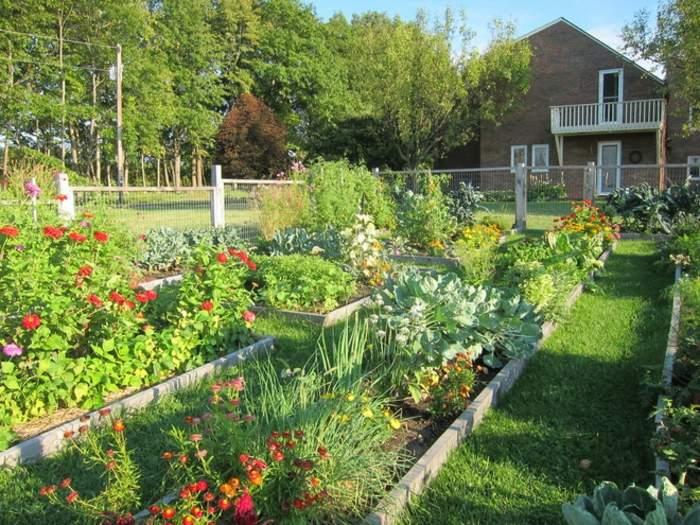 jardines borde concepto fuentes plantas