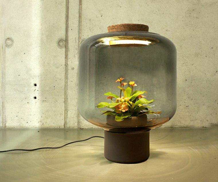 lamparas vidrio planta dentro