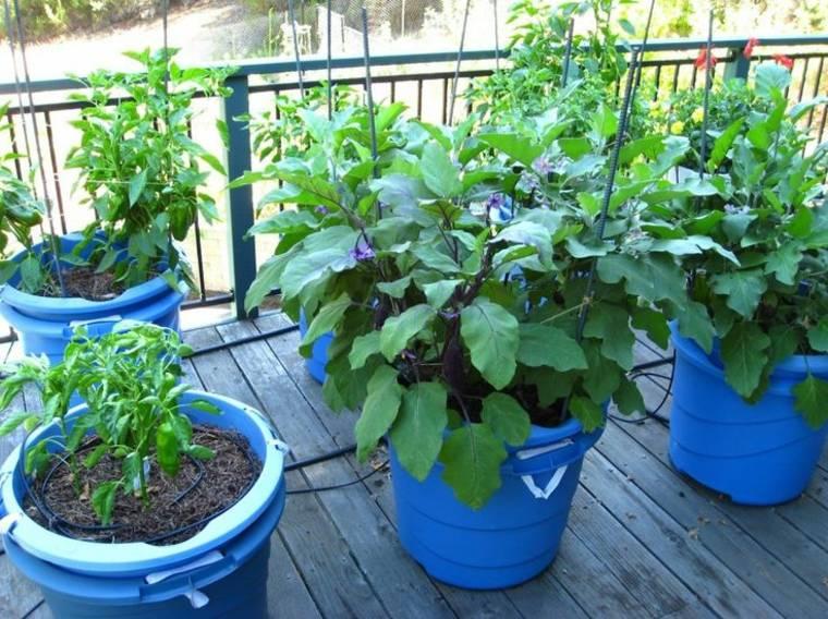 macetas azules balcon huerta