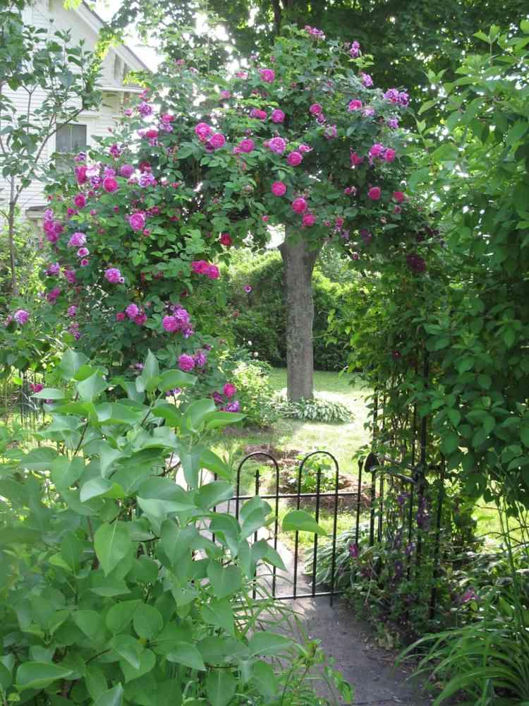 metalica entrada natural arcos rosa