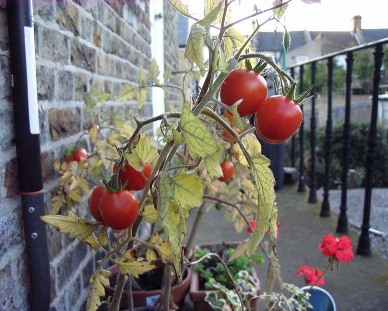 Huerto en el balc n treinta y cuatro ideas sencillas - Tomates cherry en maceta ...