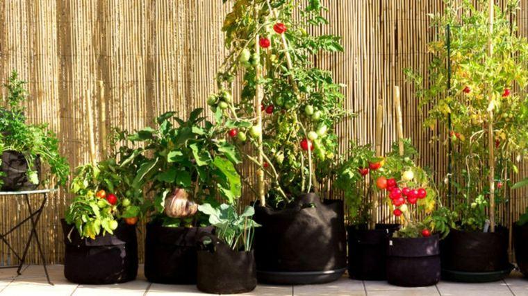 plantar tomates balcon terraza
