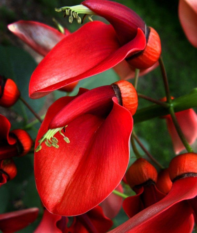 plantas de jardin anturio rojo ideas