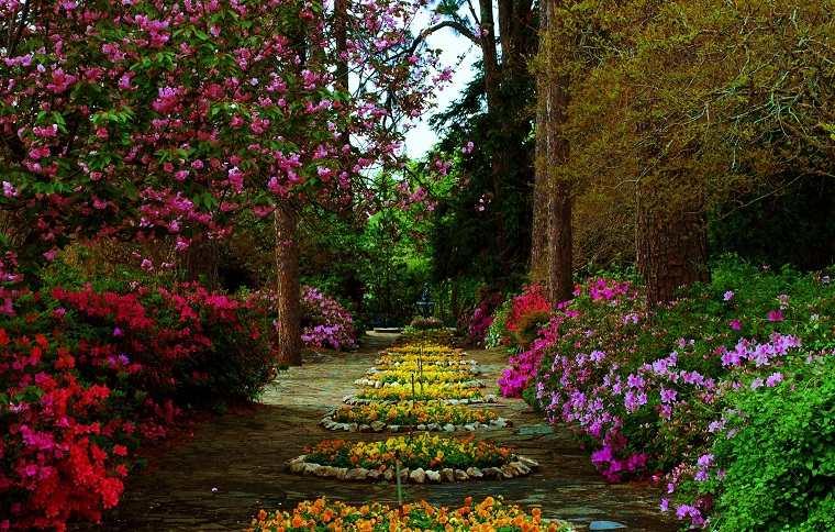 plantas de jardin hermosos arbustos jazmin ideas