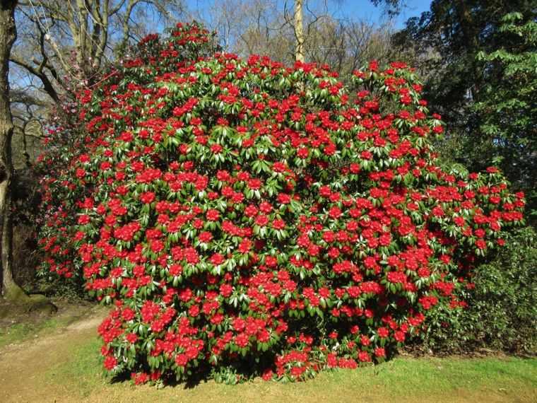 Plantas de jardin ideas para protegerlas y cuidarlas for Arbustos con flores para jardin