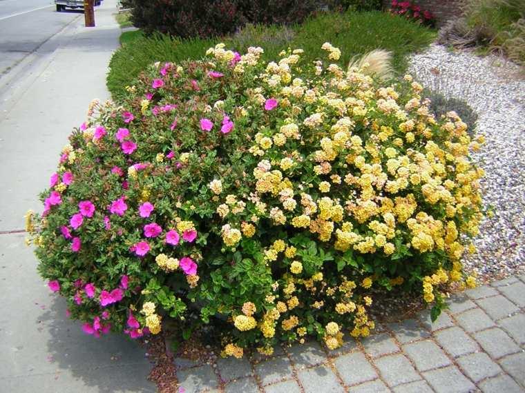 plantas jardin delantero lantanas preciosas ideas