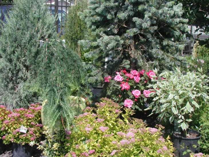 plantas macetas efectos creativos flores