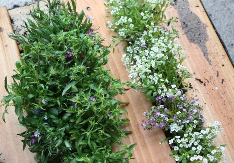 plantas pequeña sitios conceptos plantaciones
