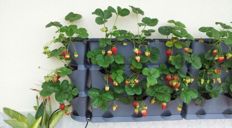 sembrar-fresas-balcon-terraza