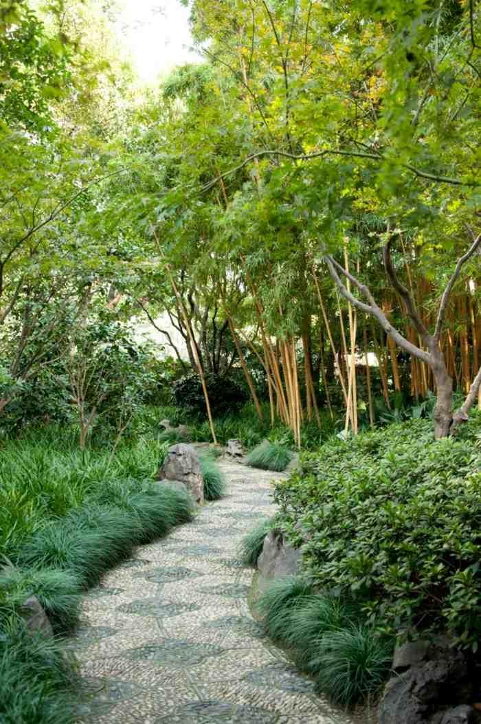 senderos bambu plantas efectos soluciones asiatico