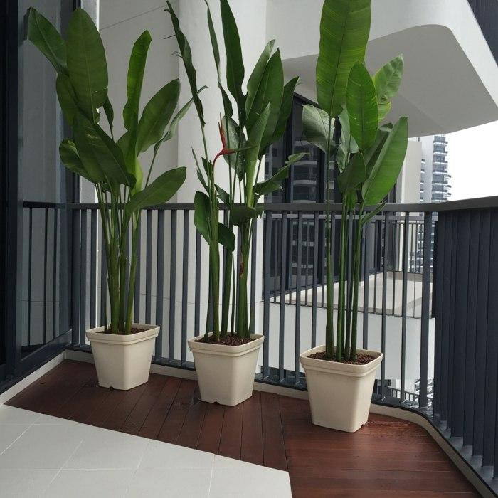 suelo madera plantas macetas figuras similares