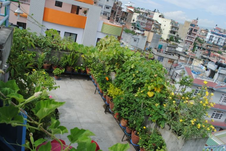 terraza pequeña muchas plantas