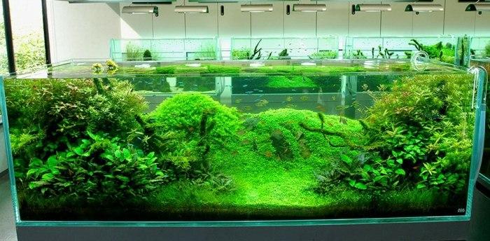 verdos colores espacios expuestas plantas luces