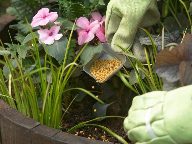 abono bolitas flores plantas deco
