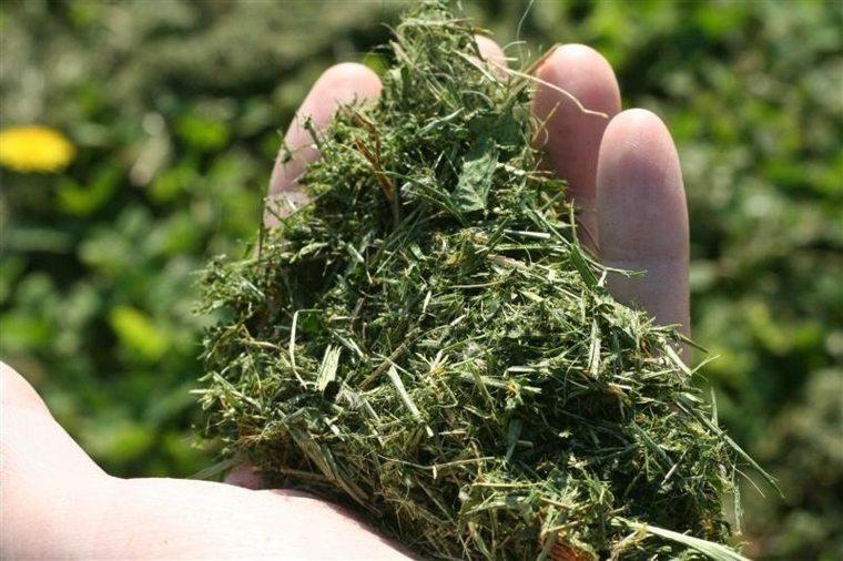 abono hierba recién cortada