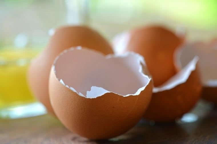 cascaras huevos abonos orgánicos